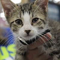 Adopt A Pet :: Jinxy - Wichita Falls, TX