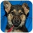 Photo 2 - German Shepherd Dog Puppy for adoption in Los Angeles, California - Harlow von Hamburg