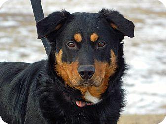 Shepherd (Unknown Type)/Rottweiler Mix Dog for adoption in Cheyenne, Wyoming - Isaih