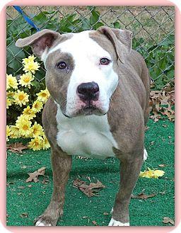 American Pit Bull Terrier Mix Dog for adoption in Marietta, Georgia - JADE
