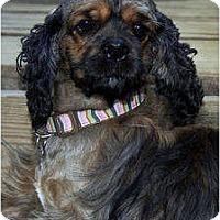 Adopt A Pet :: Olivia - Sugarland, TX