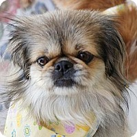 Adopt A Pet :: Cricket - Los Angeles, CA