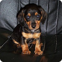 Adopt A Pet :: Fenway - Greenville, RI