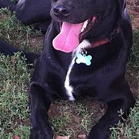 Adopt A Pet :: Sadie - Columbia, KY
