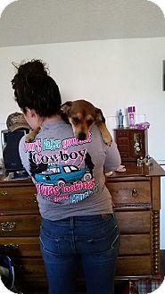 Pug/Beagle Mix Dog for adoption in Savannah, Tennessee - Jules