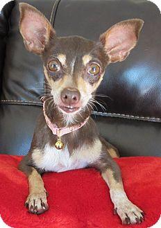 Chihuahua Mix Dog for adoption in San Diego, California - Vera