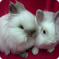 Adopt A Pet :: Eliza & Bean - Los Angeles, CA