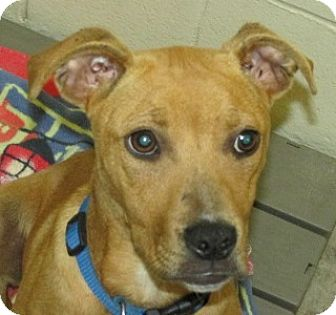 Terrier (Unknown Type, Medium) Mix Dog for adoption in Aiken, South Carolina - SAMANTHA