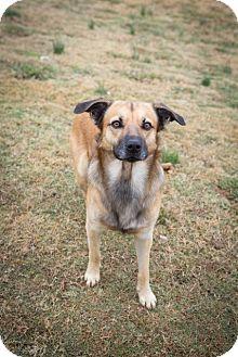 Shepherd (Unknown Type)/Shepherd (Unknown Type) Mix Dog for adoption in Brattleboro, Vermont - Bandit