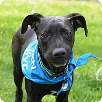 Adopt A Pet :: Louis - Knoxville, TN