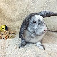 Adopt A Pet :: Spike - Paramount, CA