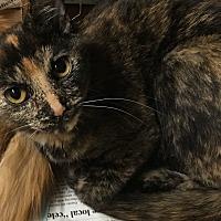 Adopt A Pet :: Mocha - Covington, KY