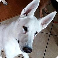 Adopt A Pet :: Fresno (01.17) - Kansas City, MO