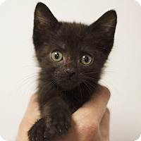Adopt A Pet :: Betty - Sioux Falls, SD