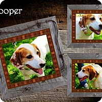 Adopt A Pet :: Cooper - Ontario, ON