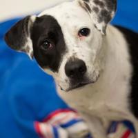 Adopt A Pet :: Starla - Dayton, OH