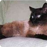 Adopt A Pet :: Keillor (gentle!) - Portland, OR