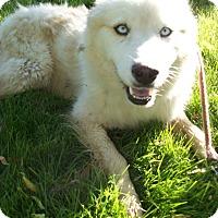 Adopt A Pet :: Ice - Augusta County, VA
