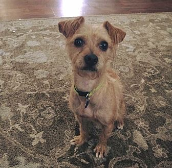 Terrier (Unknown Type, Small) Mix Dog for adoption in Mexia, Texas - Cooper