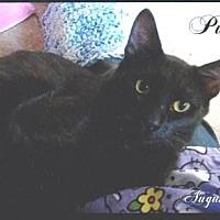 Adopt A Pet :: Pumba - Calimesa, CA