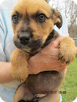 Terrier (Unknown Type, Medium) Mix Puppy for adoption in Williston Park, New York - ZARA