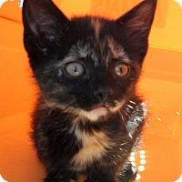 Adopt A Pet :: Pixie - Siren, WI