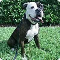 Adopt A Pet :: ECLIPSE - West Palm Beach, FL