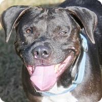 Adopt A Pet :: MISSY - Fernandina Beach, FL