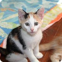 Adopt A Pet :: Cassie - Parkland, FL