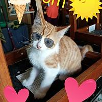Adopt A Pet :: Tom - Highland, MI