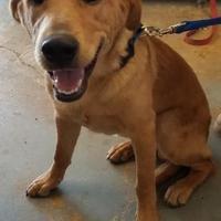 Adopt A Pet :: Ruger(PAWS) - Brownwood, TX