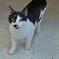 Adopt A Pet :: Turk - Chambersburg, PA