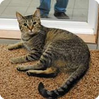 Adopt A Pet :: 17-071 Victoria - York County, PA