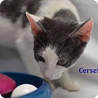 Adopt A Pet :: Cersei - Miami Shores, FL