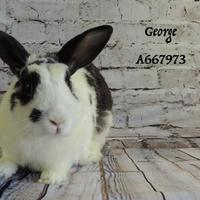 Other/Unknown Mix for adoption in Camarillo, California - *GEORGE