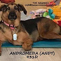 Adopt A Pet :: Andromeda (Andy) - Spring, TX