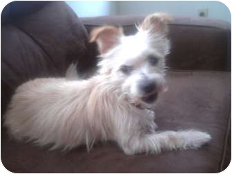 Terrier (Unknown Type, Small) Mix Dog for adoption in Portland, Oregon - Sandy