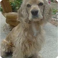 Adopt A Pet :: Finn - Sugarland, TX