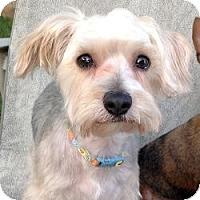 Adopt A Pet :: Murphy - Austin, TX