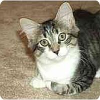 Adopt A Pet :: Ariel - Greenville, SC