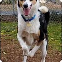 Adopt A Pet :: Toby - Gardena, CA