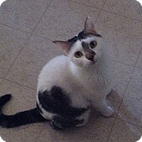 Adopt A Pet :: Mollie - Mesa, AZ