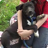 Adopt A Pet :: Newton - Rockaway, NJ