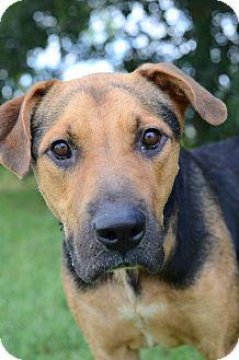 Hound (Unknown Type)/Mastiff Mix Dog for adoption in LAFAYETTE, Louisiana - BUCK