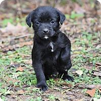 Adopt A Pet :: Barbie - South Dennis, MA