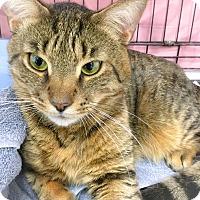 Adopt A Pet :: Russia - Webster, MA