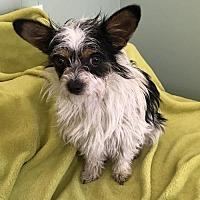 Adopt A Pet :: Gumdrop - Costa Mesa, CA