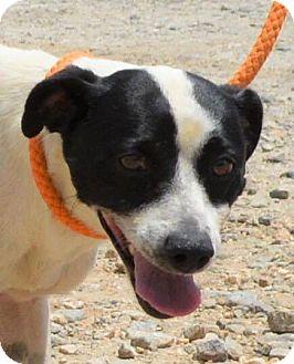 Terrier (Unknown Type, Medium) Mix Dog for adoption in Allentown, New Jersey - Lloyd
