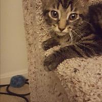 Adopt A Pet :: Lucy - Covington, KY