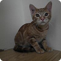 Adopt A Pet :: Firenze - Milwaukee, WI